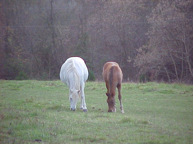 Melia, the grey mare and Montanna, the son of Tahir and Dekota.